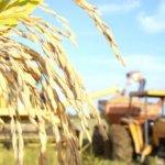 A gestão da lavoura e sua rentabilidade