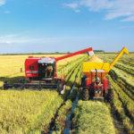 Melhorando a produtividade da lavoura de arroz