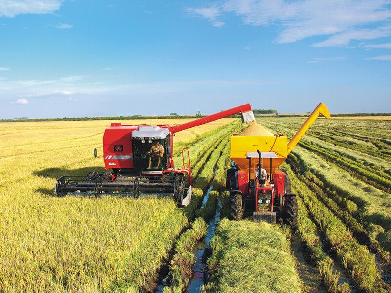 Maior produtividade na lavoura não significa necessariamente maior custo. Foto: Nilson Conrad - IRGA