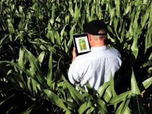 Software para fazenda: O que é e para que serve?