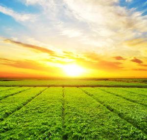 sol e plantação