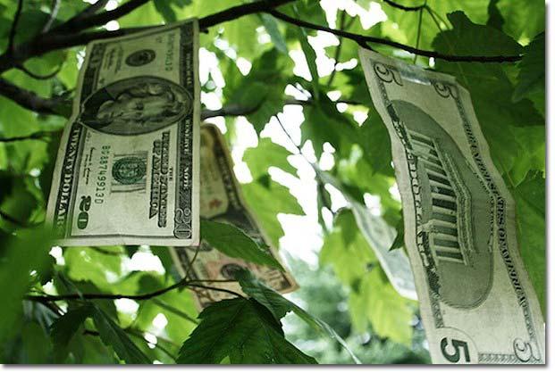 árvore de dinheiro no planejamento agrícola