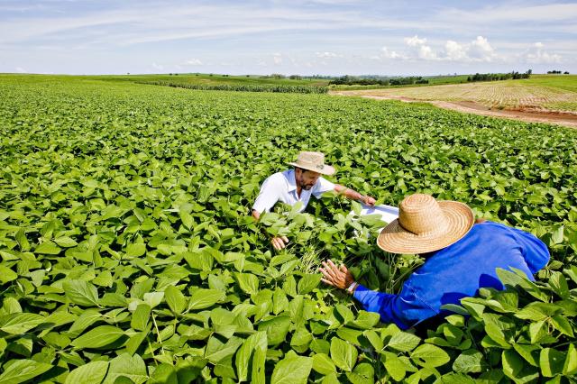 Monitoramento de Pragas em Soja para aplicação de defensivos agrícolas