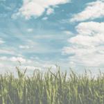 7 Dicas para acertar na rentabilidade com planejamento agrícola