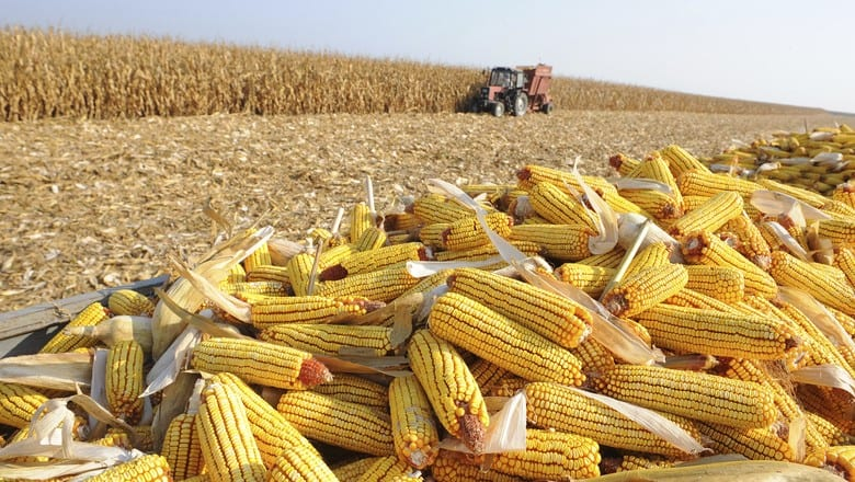 semeadura do milho com planejamento agrícola