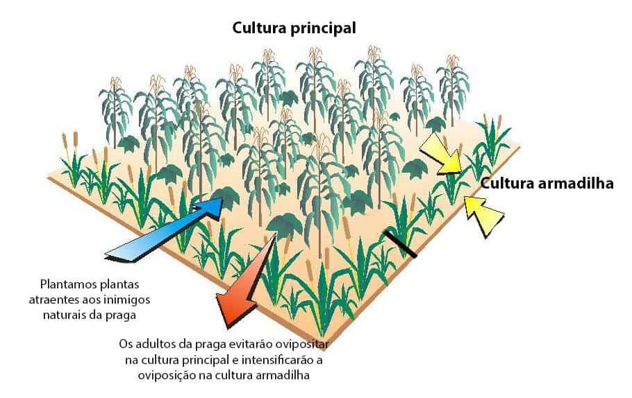 cultura-armadilha