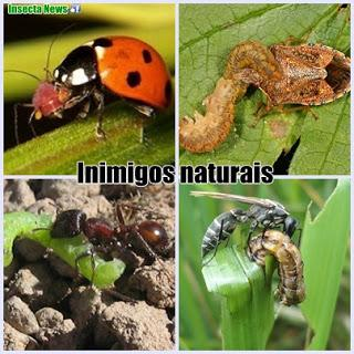 inimigos-naturais