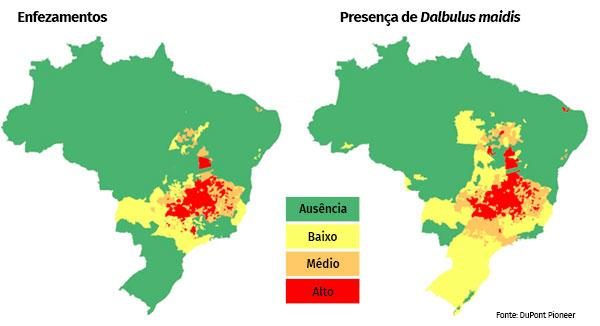 enfezamentos-mapa-cigarrinha do milho