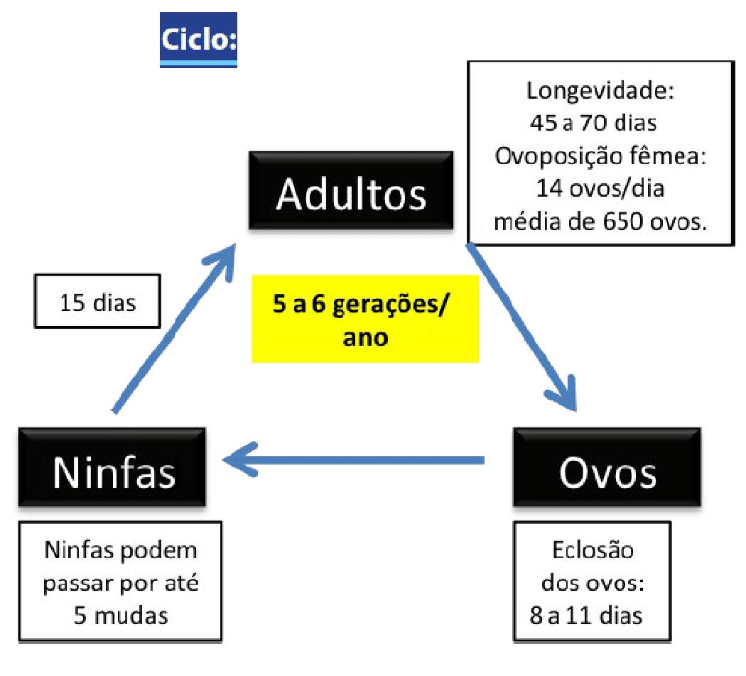 ciclo da cigarrinha-do-milho