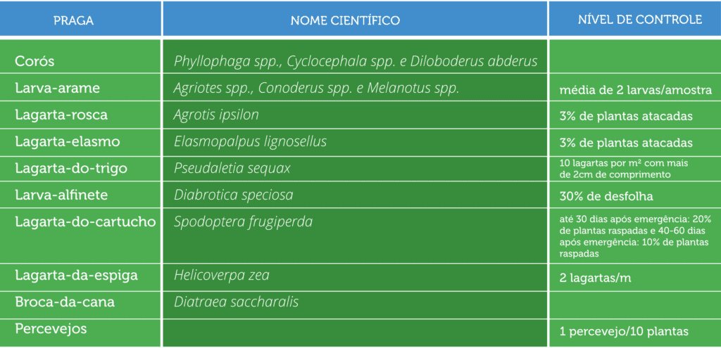 spodoptera-frugiperda-lagarta-do-cartucho