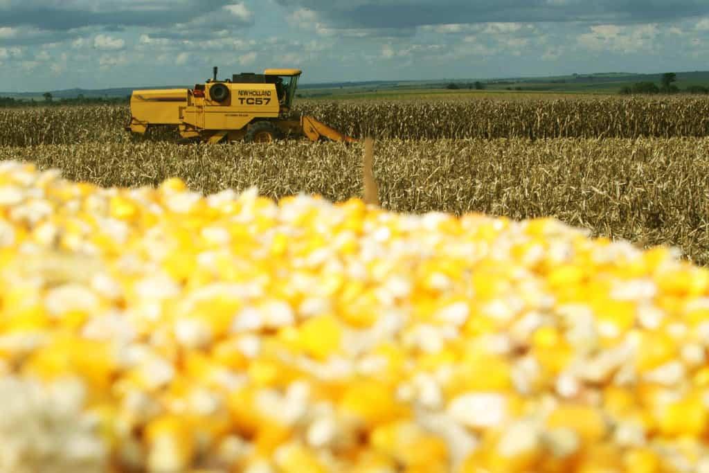 cálculo de perdas na colheita de milho