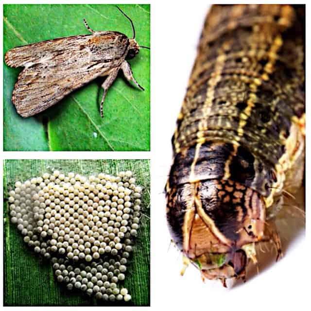 tipos de inseticidas