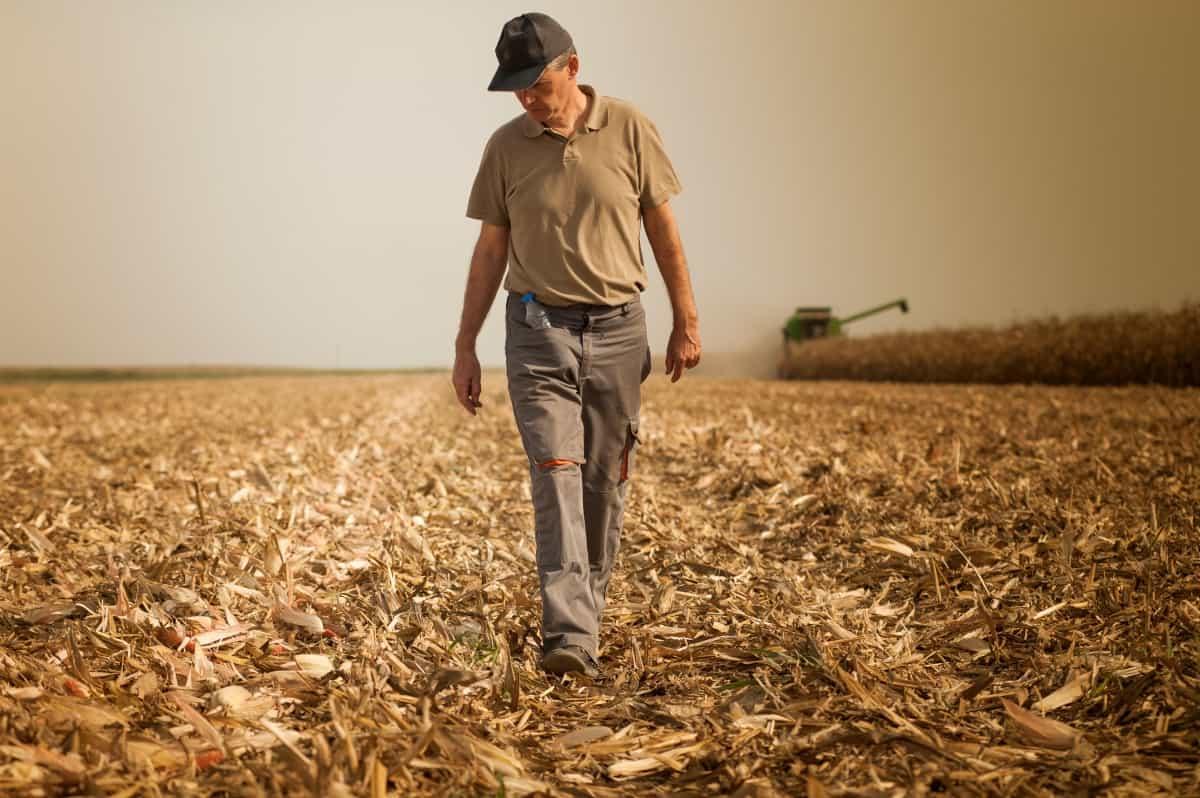 produtor-na-colheita