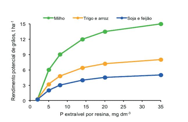 rendimento-grãos-fósforo
