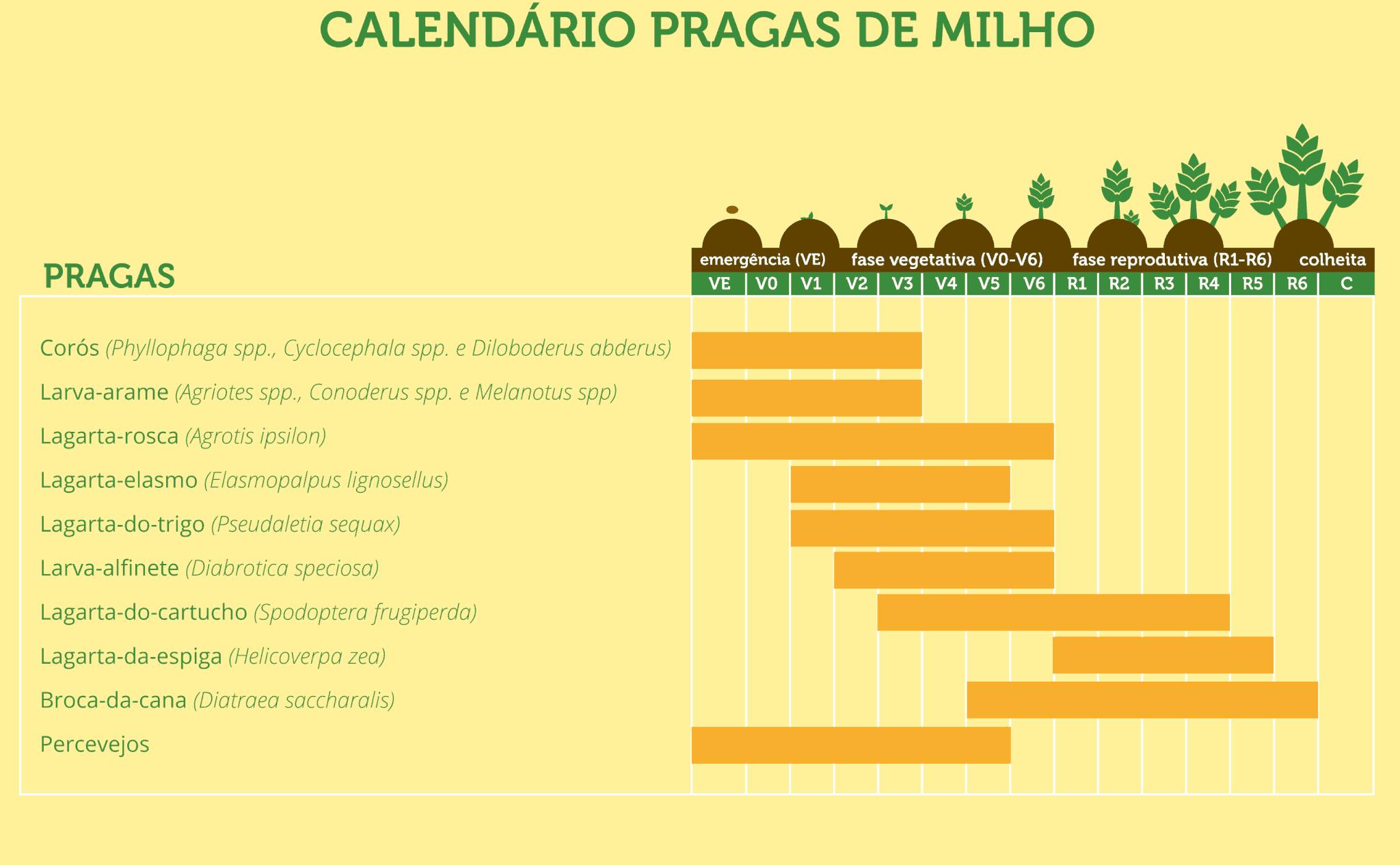 pragas-cultura-milho