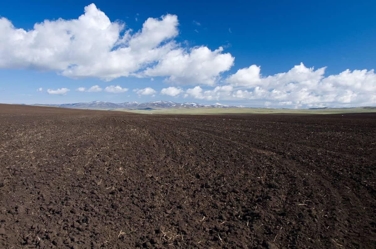 análise química do solo