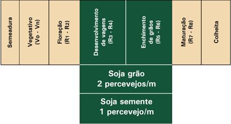 5-percevejo-marrom