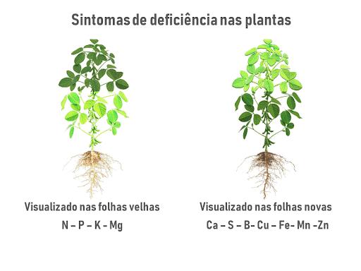 4- fertilidade-do-solo-e-nutrição-de-plantas