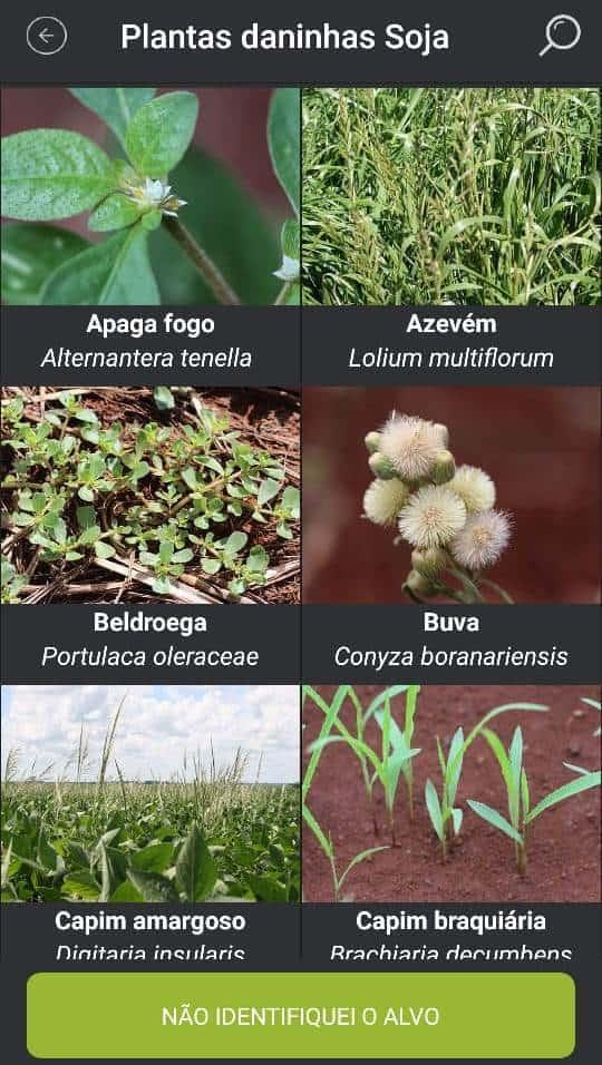 4-identificação-de-plantas-daninhas