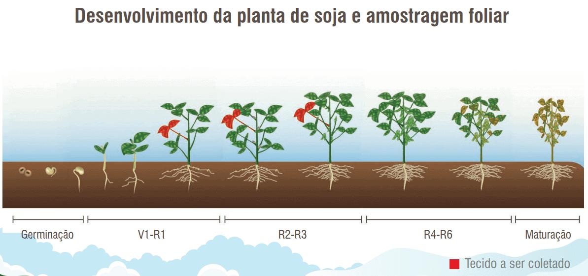 6- fertilidade-do-solo-e-nutrição-de-plantas