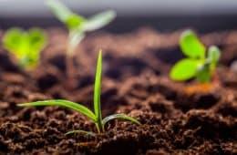 fertilidade-do-solo-e-nutrição-de-plantas
