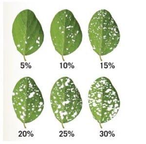 6-inseticidas-desfolha-soja