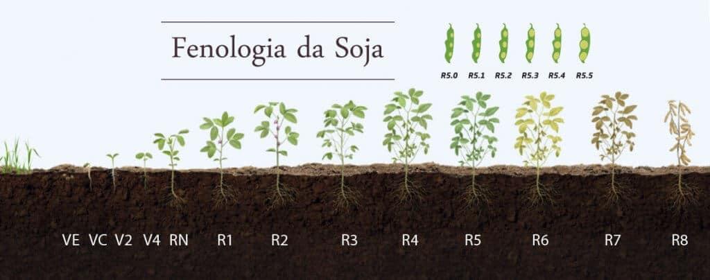 fenologia da soja. Fonte: Coopertradição