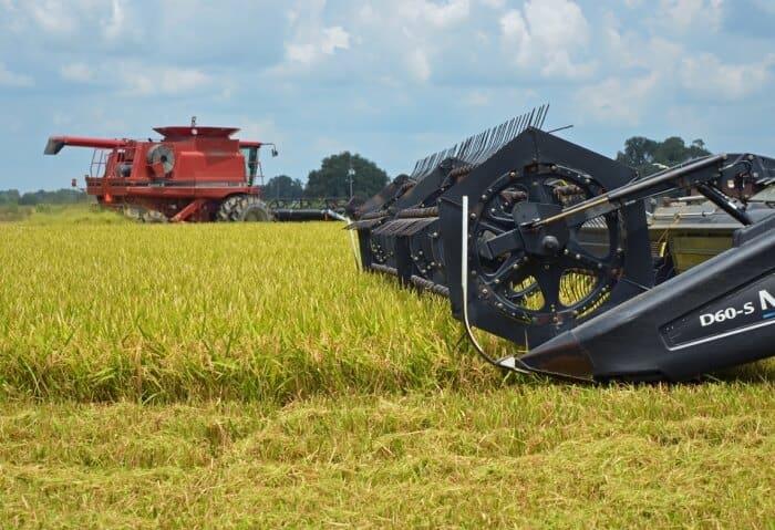 5-colheita-de-arroz