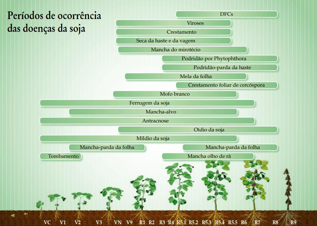 5-doenças-de-final-de-ciclo-soja
