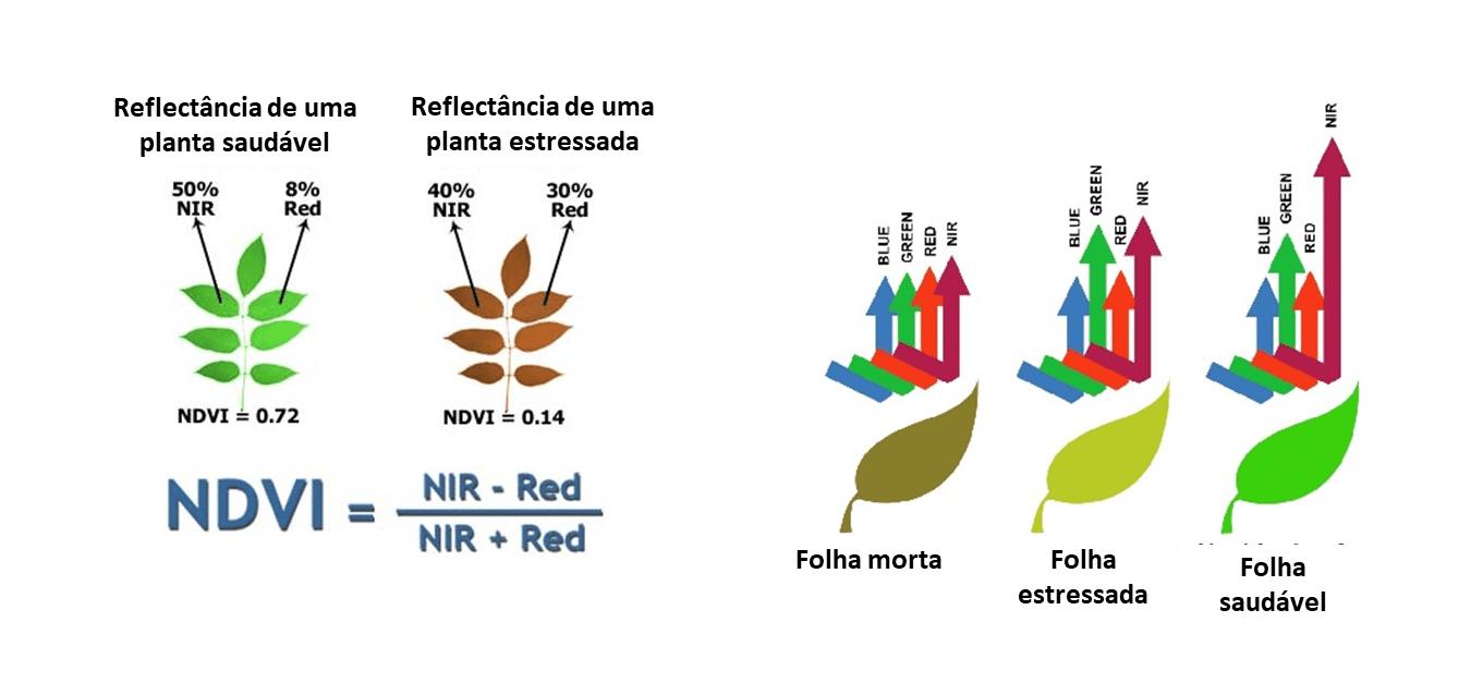 8-NDRE-gráficos-explicação