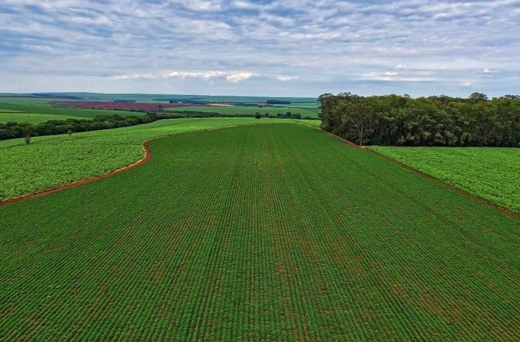 perspectivas agronegócio brasileiro 2019