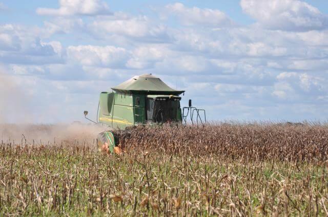 colheita-do-milho