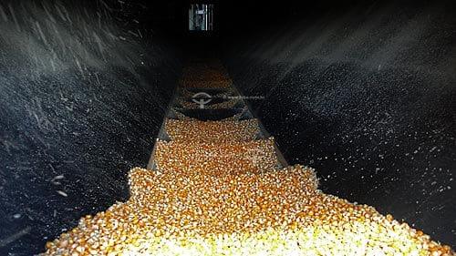 secagem de grãos de milho