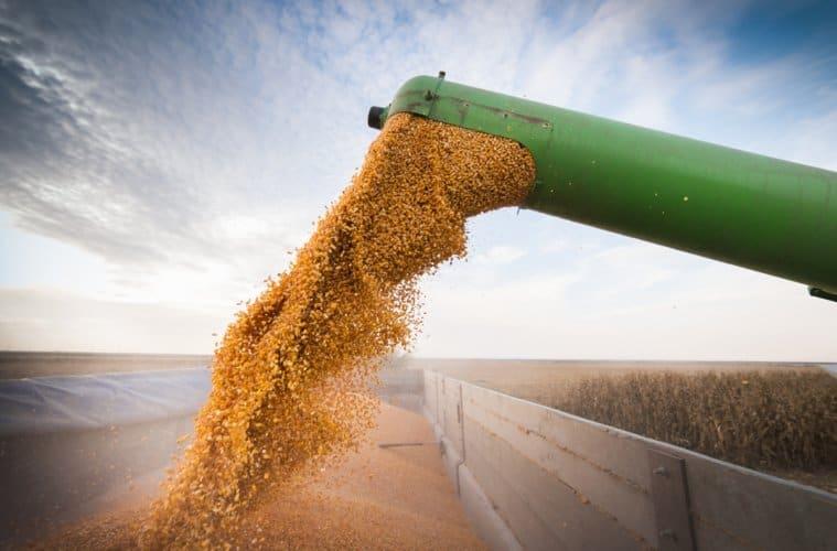 Resultado de imagem para colheita de milho