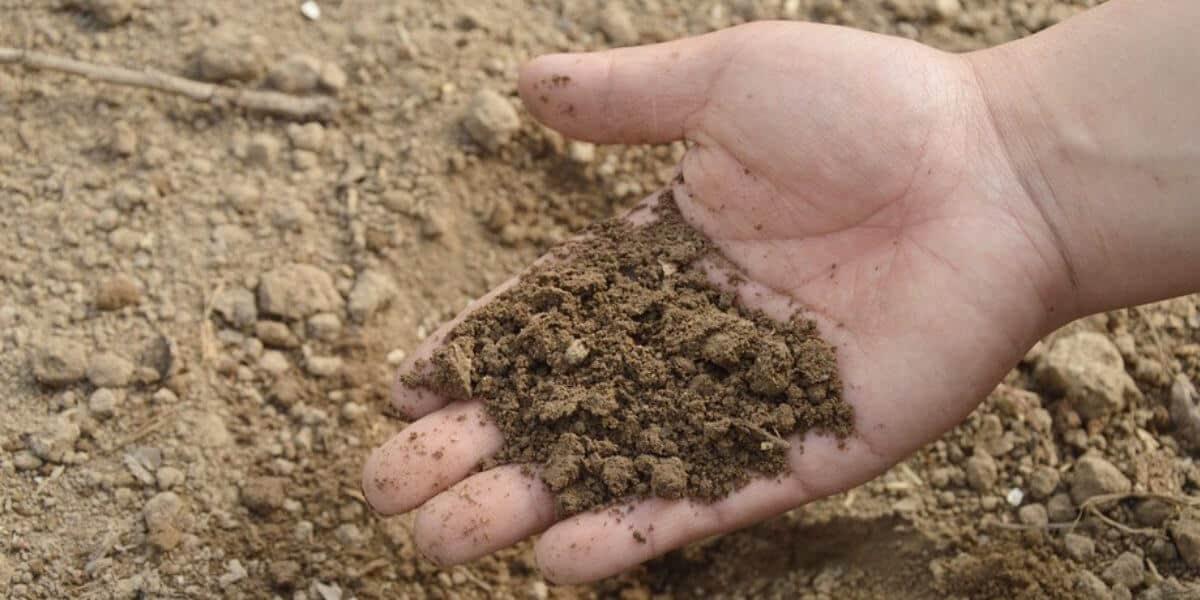 interpretação de análise de solo