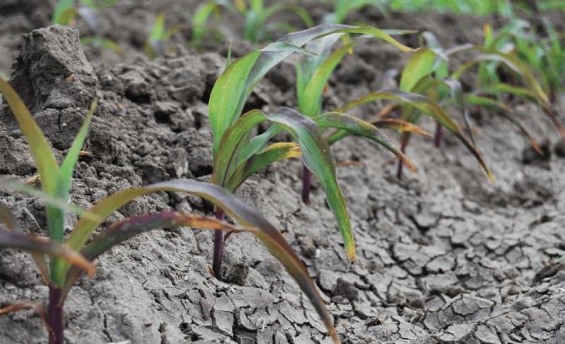 fósforo para plantas