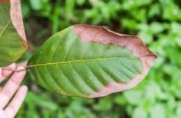 potássio nas plantas