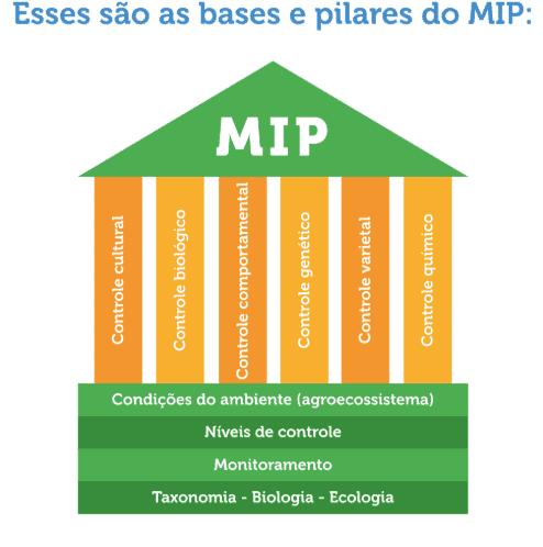 infográfico com bases e pilares do MIP