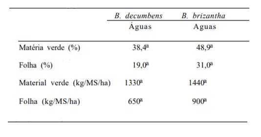 braquiaria decumbens