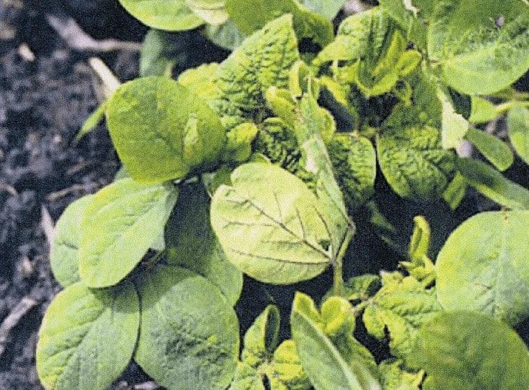dessecação para plantio de soja