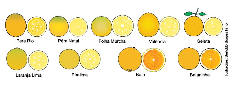 laranja valencia