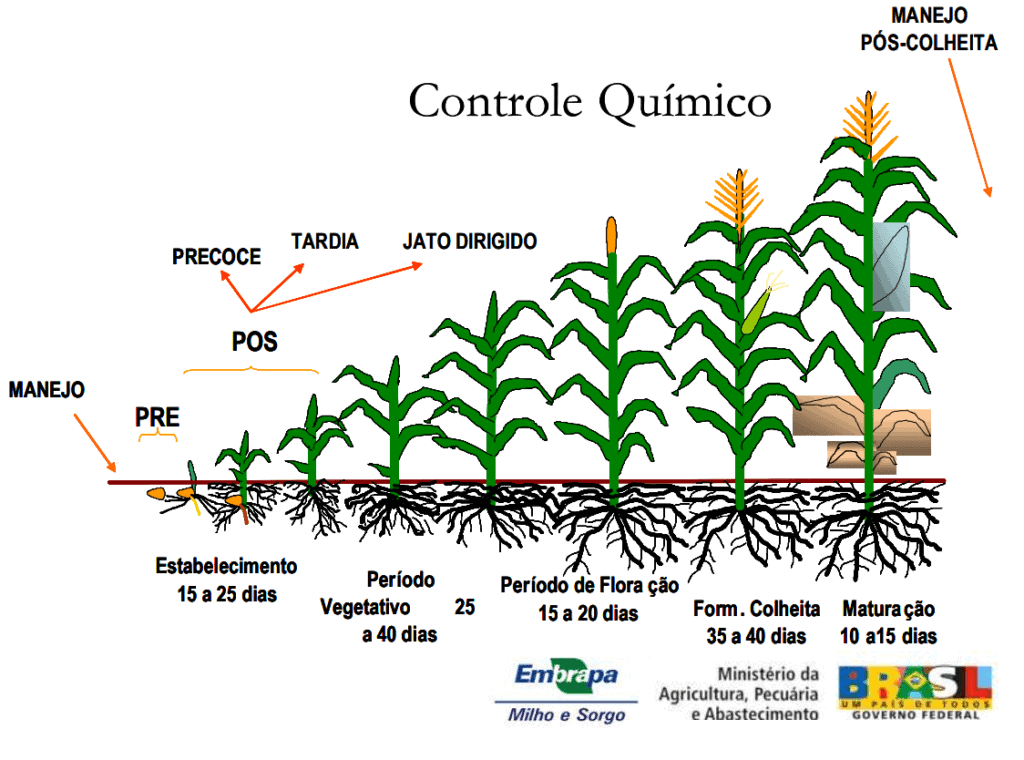 herbicida pre emergente milho