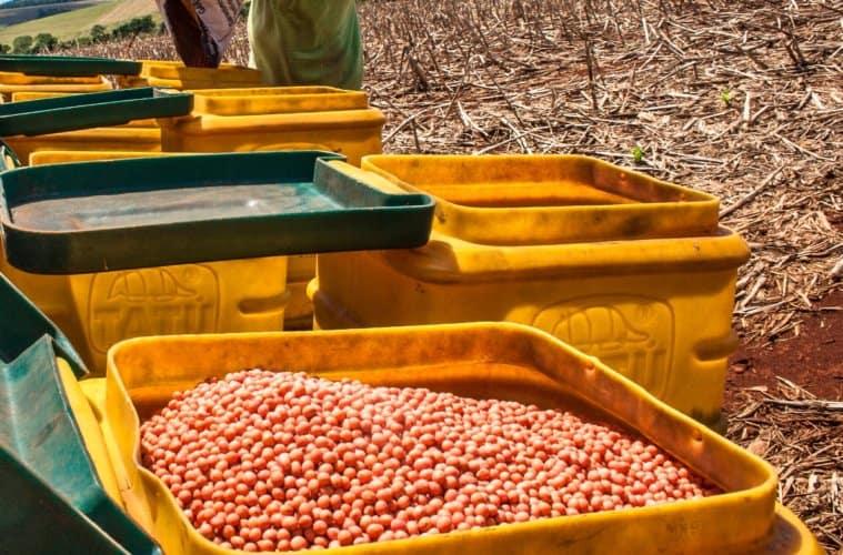 calculo de semeadura de soja