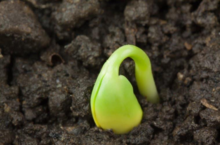 plantio da soja