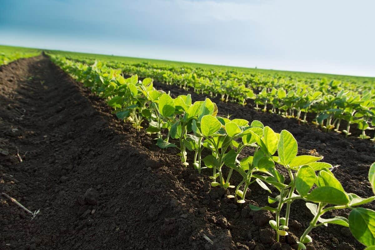 plantio de soja 2019/20