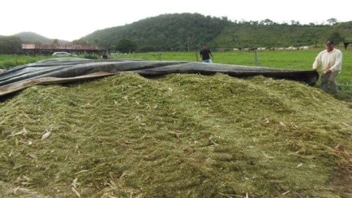 Processo de ensilamento milho