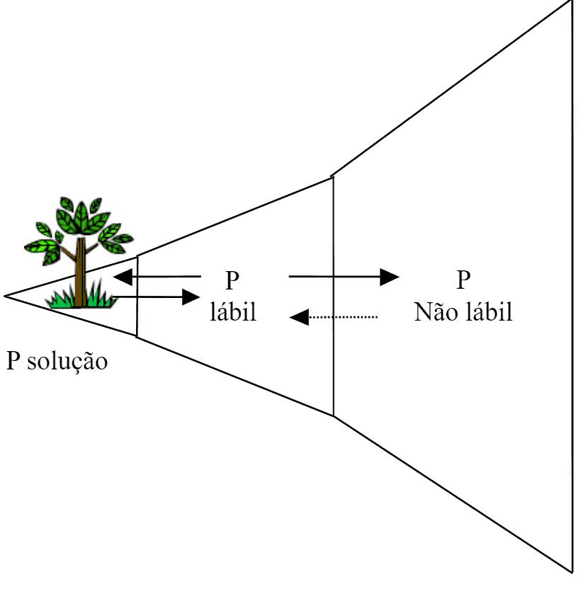 Relação entre o fósforo na solução do solo