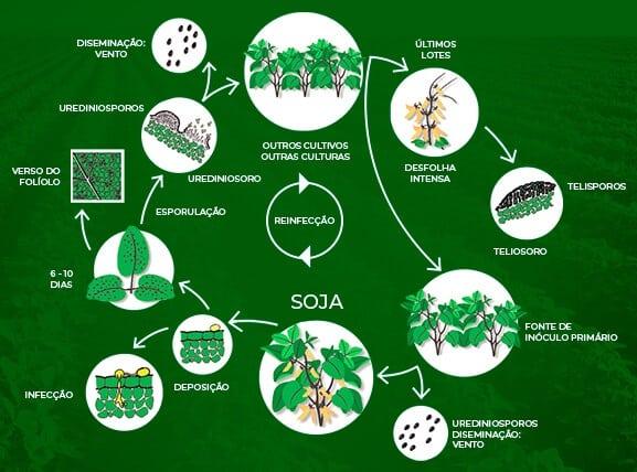 ciclo da ferrugem da soja