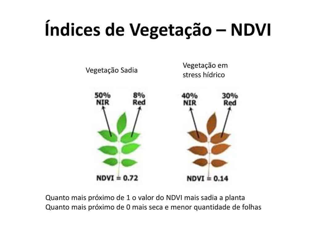 Índice de vegetação e comportamento espectral