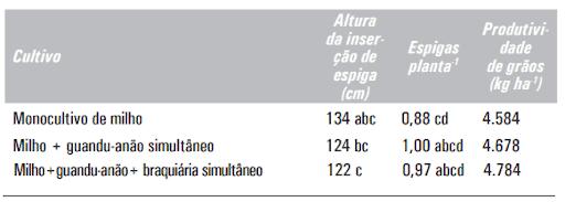Milho (BRS 1035) solteiro e em diferentes consórcios